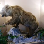 Grizzly (Ambiente) - Restaurant Hotel Grizzly - Sankt Margarethen / Lungau